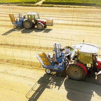 Plantação Mecanica de Vinhas-min